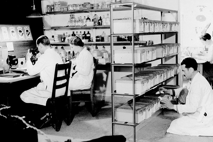 MacDowell in his mouse genetics lab