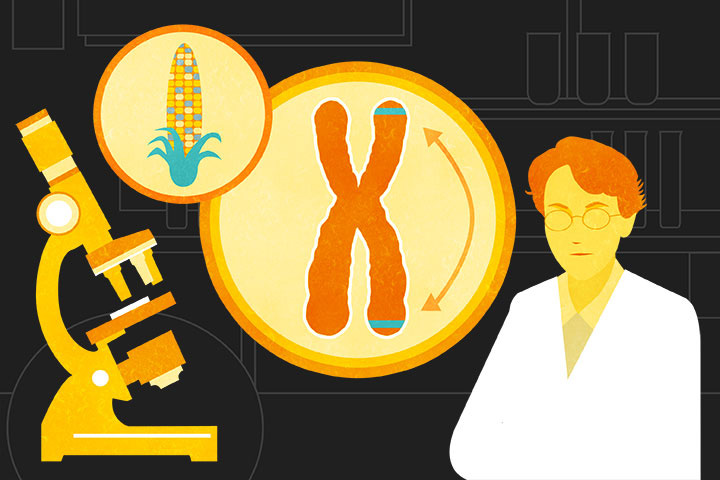 Illustration of Barbara McClintock's jumping genes