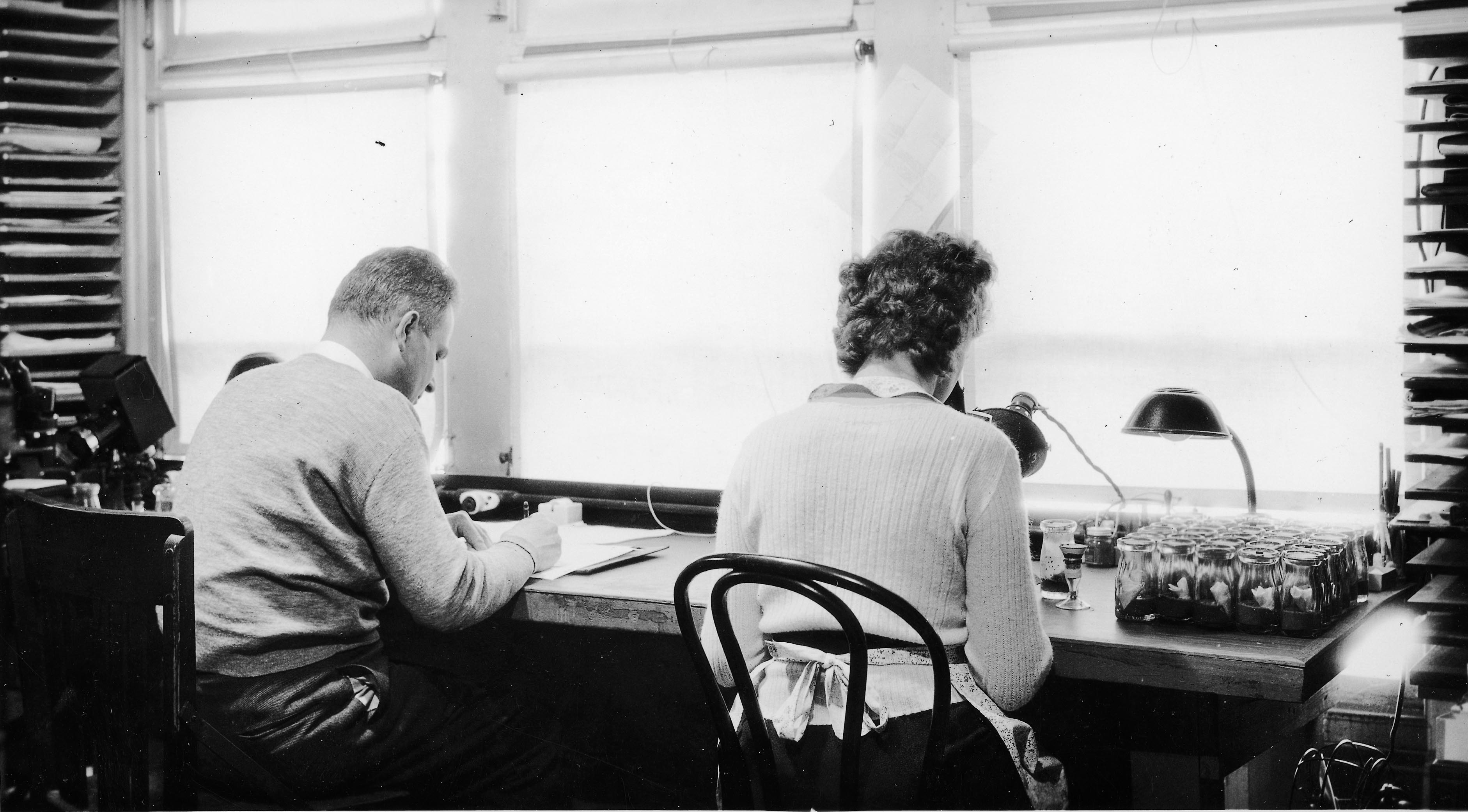 Milislav Demerec and Assistant circa 1930s, at what may be the same bench Mrs. Natalie Meyer worked at subsequently